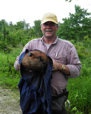Peter Busher poses with beaver captured for analysis