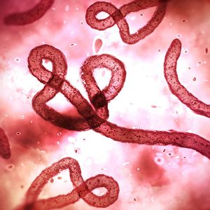 Ebola virus under a microscope