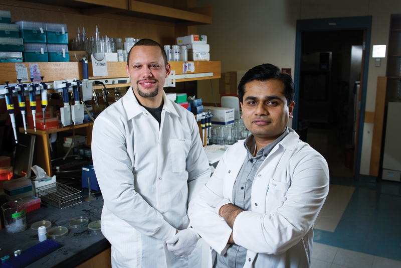 Douglas Densmore, engineering assistant professor, and Swapnil Bhatia, engineering research assistant professor, are collaborating to streamline synthetic biology from concept to design to assembly. Photo by Jackie Ricciardi