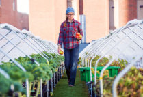 Boston Medical Center's cultivated rooftop feeds patients with homegrown produce