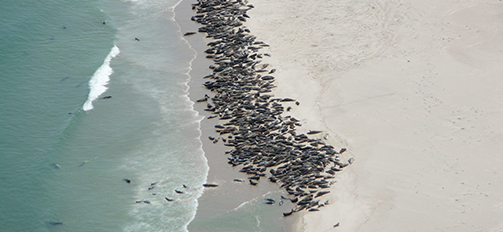 Greg Skomal: Tracking Cape Cod White Sharks   Bostonia   BU