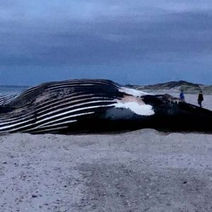 Vector beached whale