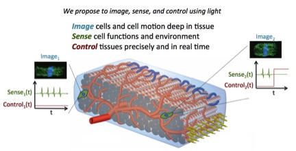 Image cells