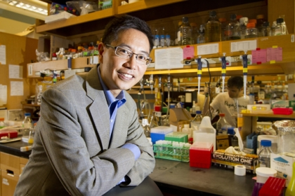 Christopher Chen, a new College of Engineering professor of biomedical engineering, is one of the world's leading experts on regenerative medicine. (Photo by Chitose Suzuki)