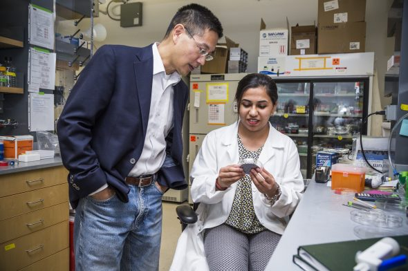 1/19/17 - Boston, Massachusetts  ENG student Varnica Bajaj (BME'19) with College of Engineering Professor Dr. Christopher Chen in a lab on January 19, 2017.  Photo by Rachel Gianatasio for Elevin Studios for Boston University Photography