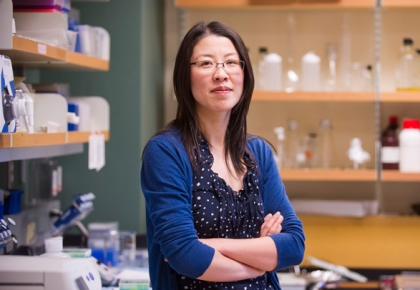 Assistant Professor Xue Han (BME) uses a technique called optogenetics--using pulses of light to control brain cells--to investigate psychiatric and neurological disorders. Photo by Cydney Scott