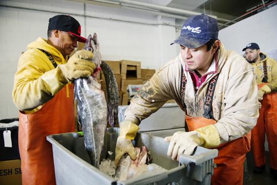 Got (Local) Fish?   BU Today   Boston University