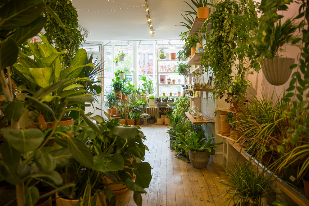 Green plants cover the walls and floor of Niche Urban Garden Supply store.