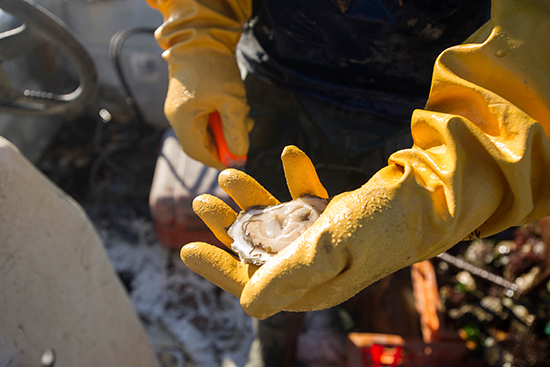 John Brawley (GRS'92) and his farm hand Sean Sullivan of Kingston working Brawley's oyster farm in Duxbury, MA