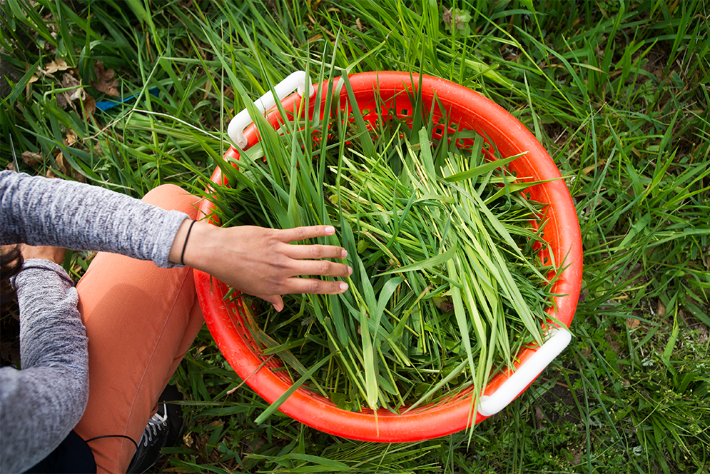 A bucket of fresh grass collected to feed rabbits at Beetlebung Farm