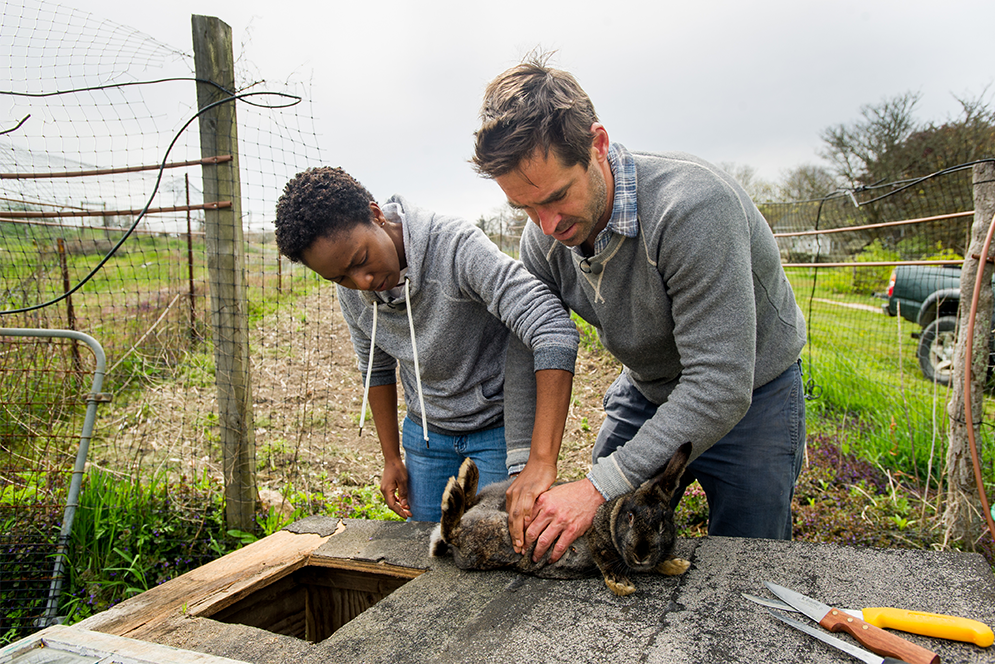 Chris Fischer and Boston University Gastronomy student Valencia Baker check to see if a rabbit at Beetlebung Farm is pregnant