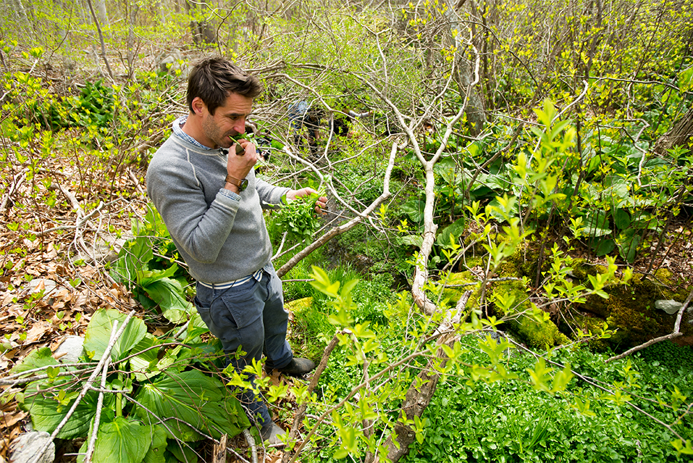 Chef Chris Fischer forages wild watercress near Beetlebung Farm in Chilmark, Massachusetts