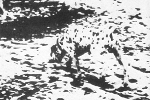 Image of black dots of a dalmation