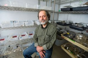 Boston University professor of biology and a social insect researcher James F. A. Traniello poses sitting among insect specimens in his lab.