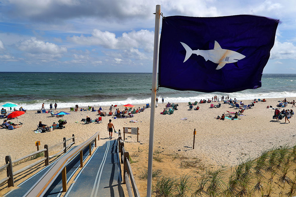 Will Sharks Scare, or Attract, Cape Cod Tourists? | BU Today