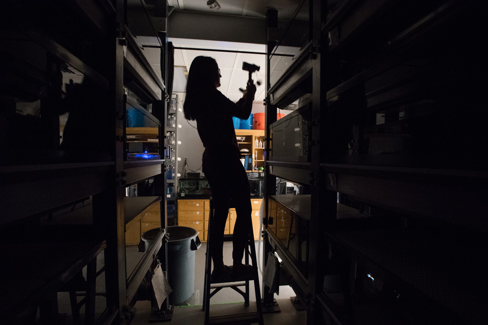 Madison Pacaro (CAS'20) removes a video camera used to record the nighttime parenting behaviors of clownfish in the Buston Lab.