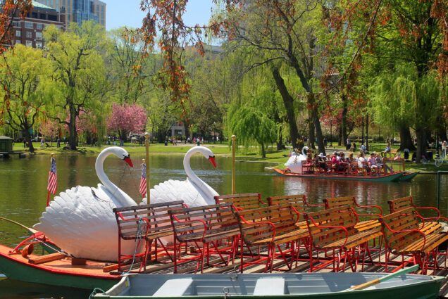 swan boats in the boston public garden