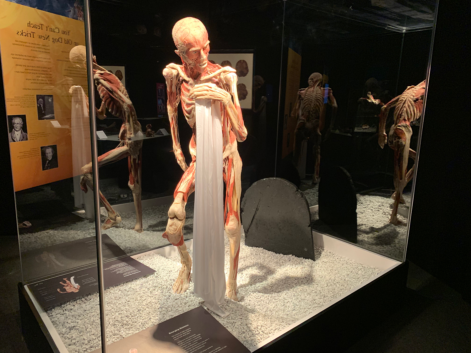 To Do Today See Inside The Human Body At The Museum Of Science S Body Worlds Exhibit