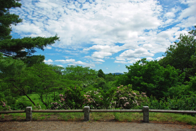 The view from Bussey Hill in the Arnold Arboretum