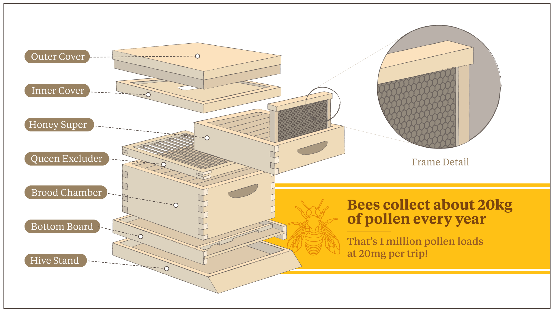 As the Country's Bee Population Rapidly Shrinks, Interest in BU Beekeeping Is Growing