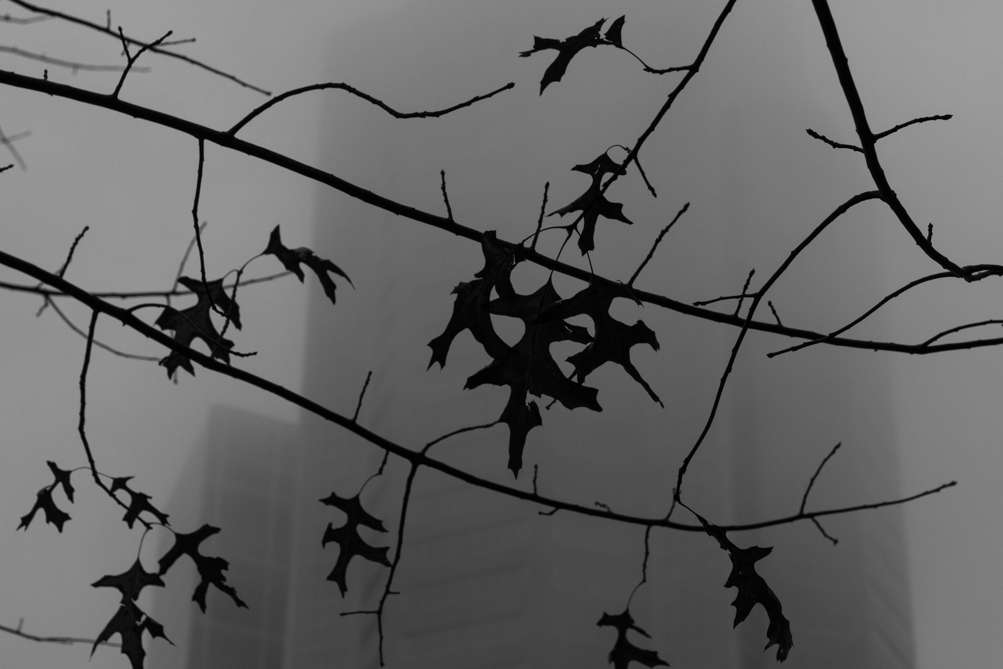 A few leaves hang on to branches at foggy dusk