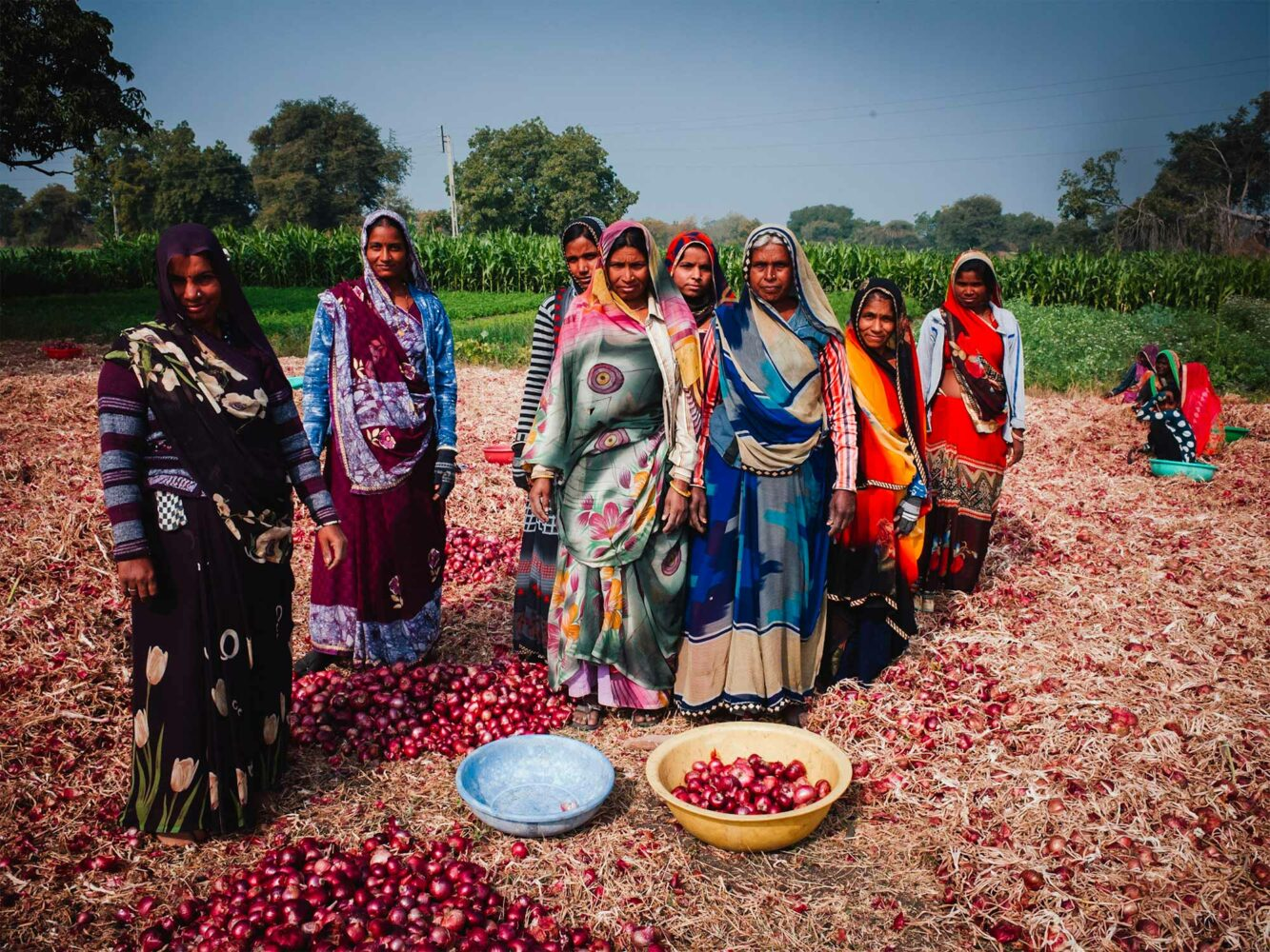 Women working a red onion field in the rural village of Budha, India.