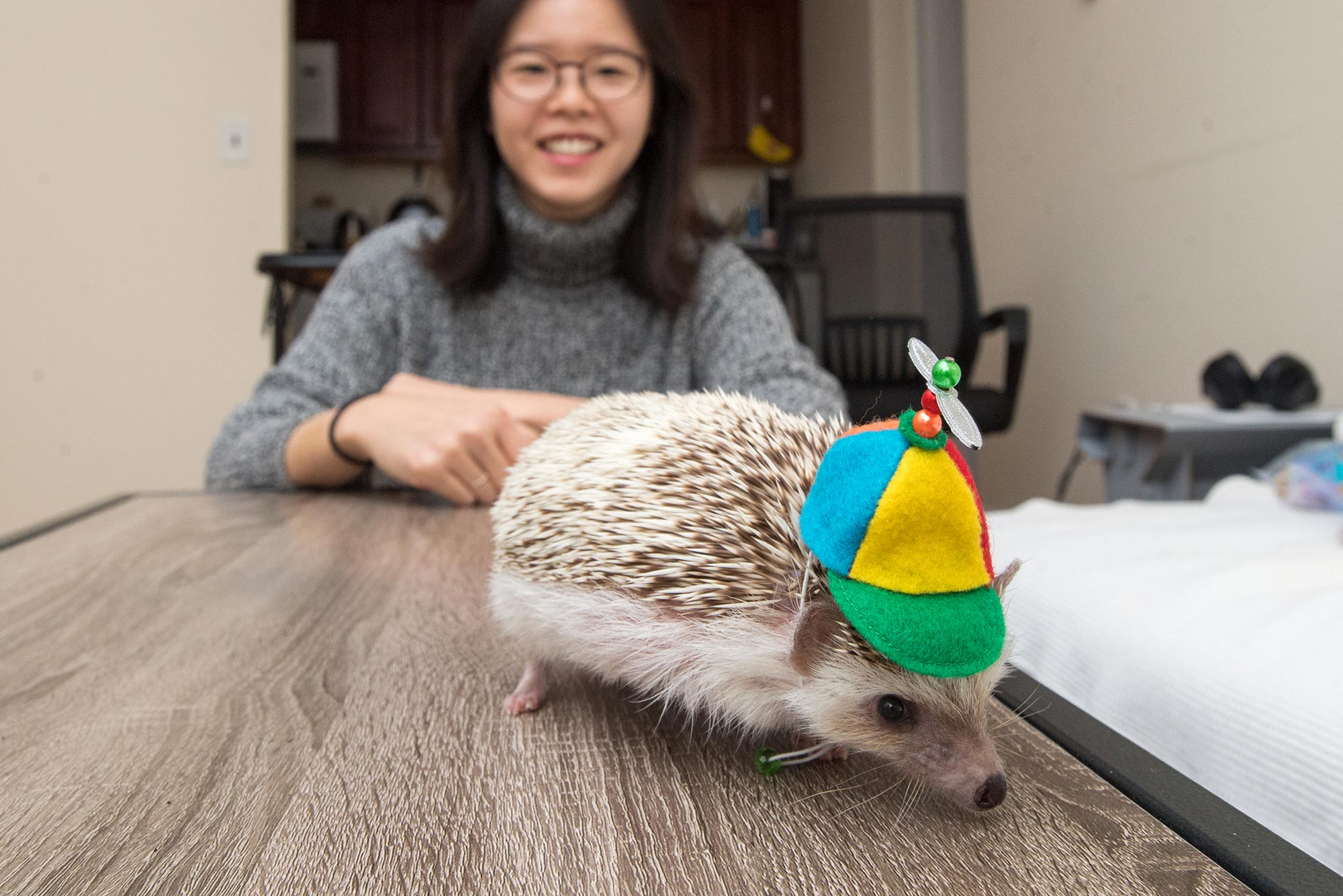Elise Lim takes a photo with her hedgehog, Alfredo, who is wearing a multicolored propeller hat.