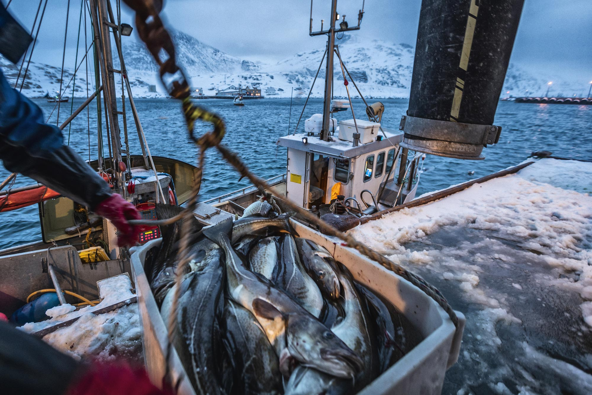 A photo of fishing boats out for skrei cod in the arctic sea