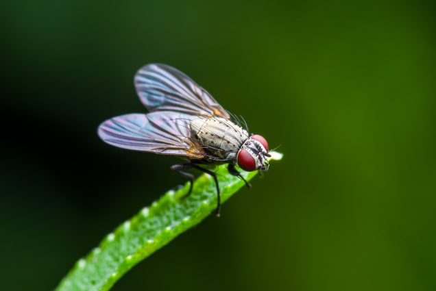 A photo of a fly on a leaf