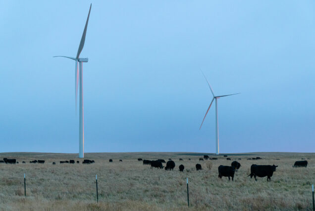 Photo of two large white wind turbines in South Dakota. Black angus cows are seen grazing in a field in the foreground.