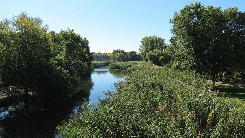 Foto di un finocchio di mezza estate, i bordi del ruscello riempiti di erba verde alta.