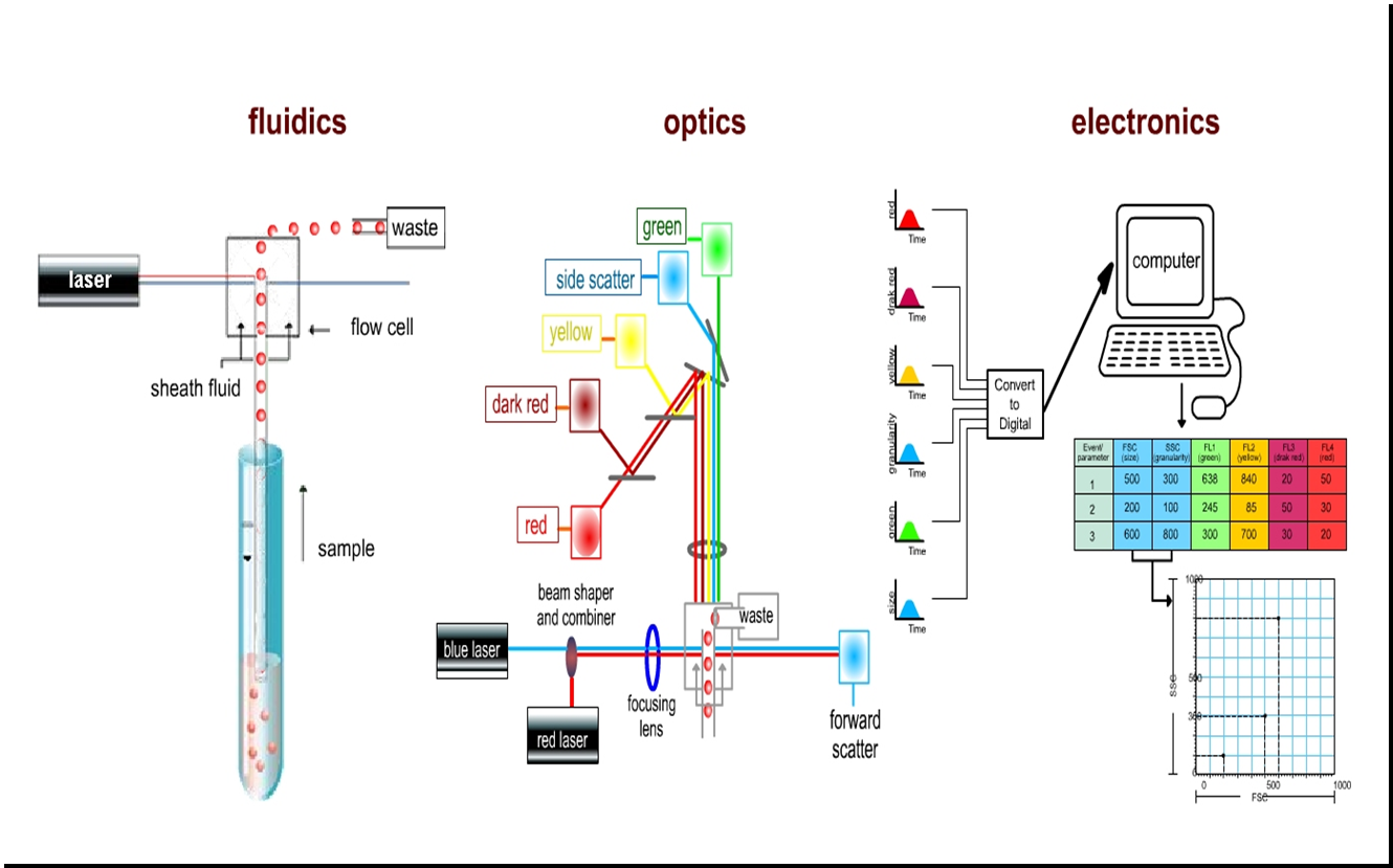 bits and bytes of biology flow cytometry