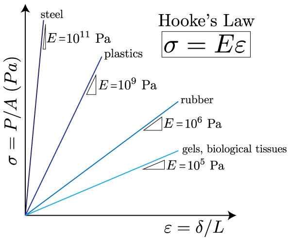 hookes law and youngs modulus relationship questions