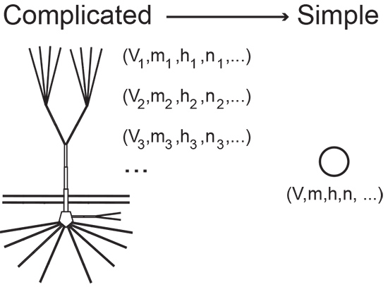 Bu mathematician mark kramer is building mathematical models of diagram showing a simple and complex model of a neuron ccuart Image collections