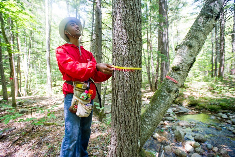 Eliandro Tavares (CGS'16, CAS'18) measures the diameter of a tree