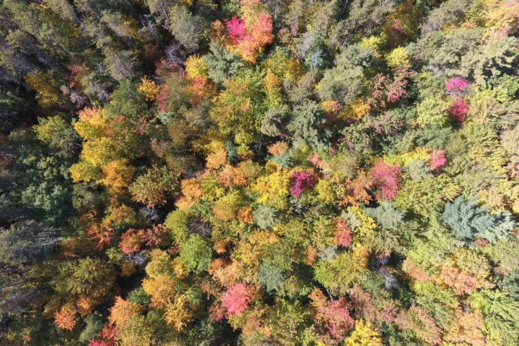 Harvard Forest in Petersham, Mass., is a more than 3,700-acre ecological research area where scientists have been carrying out experiments since 1907.