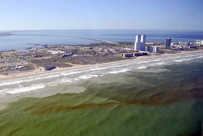 About Florida Red Tides