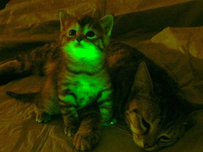 Glow In The Dark Cats » Synapse | Blog Archive | Boston ...
