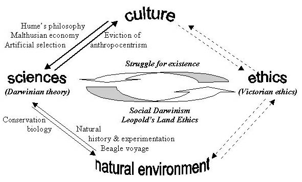 th wcp the dialectical links between environmental ethics and  chart